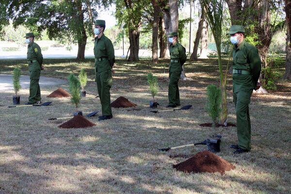 Árboles listos para ser sembrados en Jardín de la Memoria, en La Habana - Sputnik Mundo