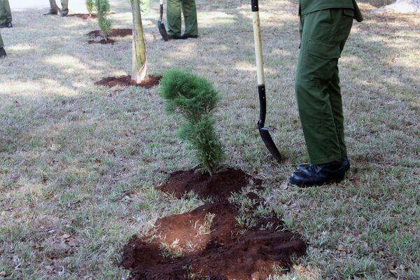 Árboles sembrados en Cuba en el Jardín de la Memoria, en homenaje a los caídos en la Gran Guerra Patria - Sputnik Mundo