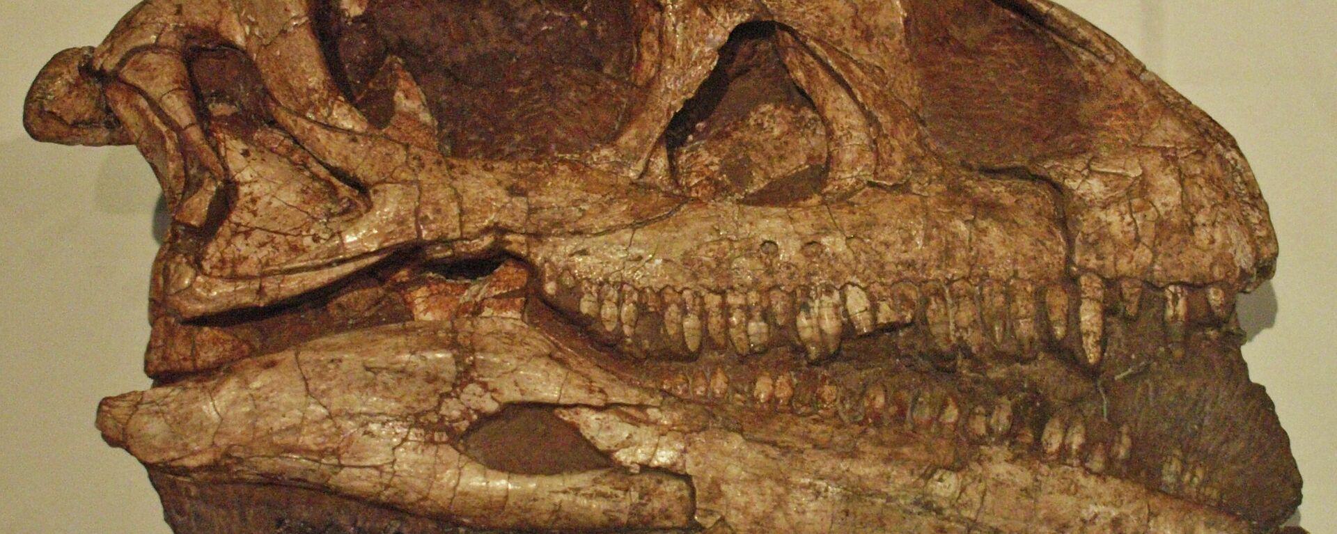 El cráneo fosilizado de un Massospondylus carinatus - Sputnik Mundo, 1920, 13.05.2021