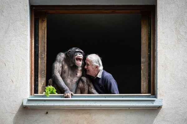 Pierre Thivillon, el propietario del zoológico francés de Saint-Martin-la-Plaine, con su chimpancé. - Sputnik Mundo