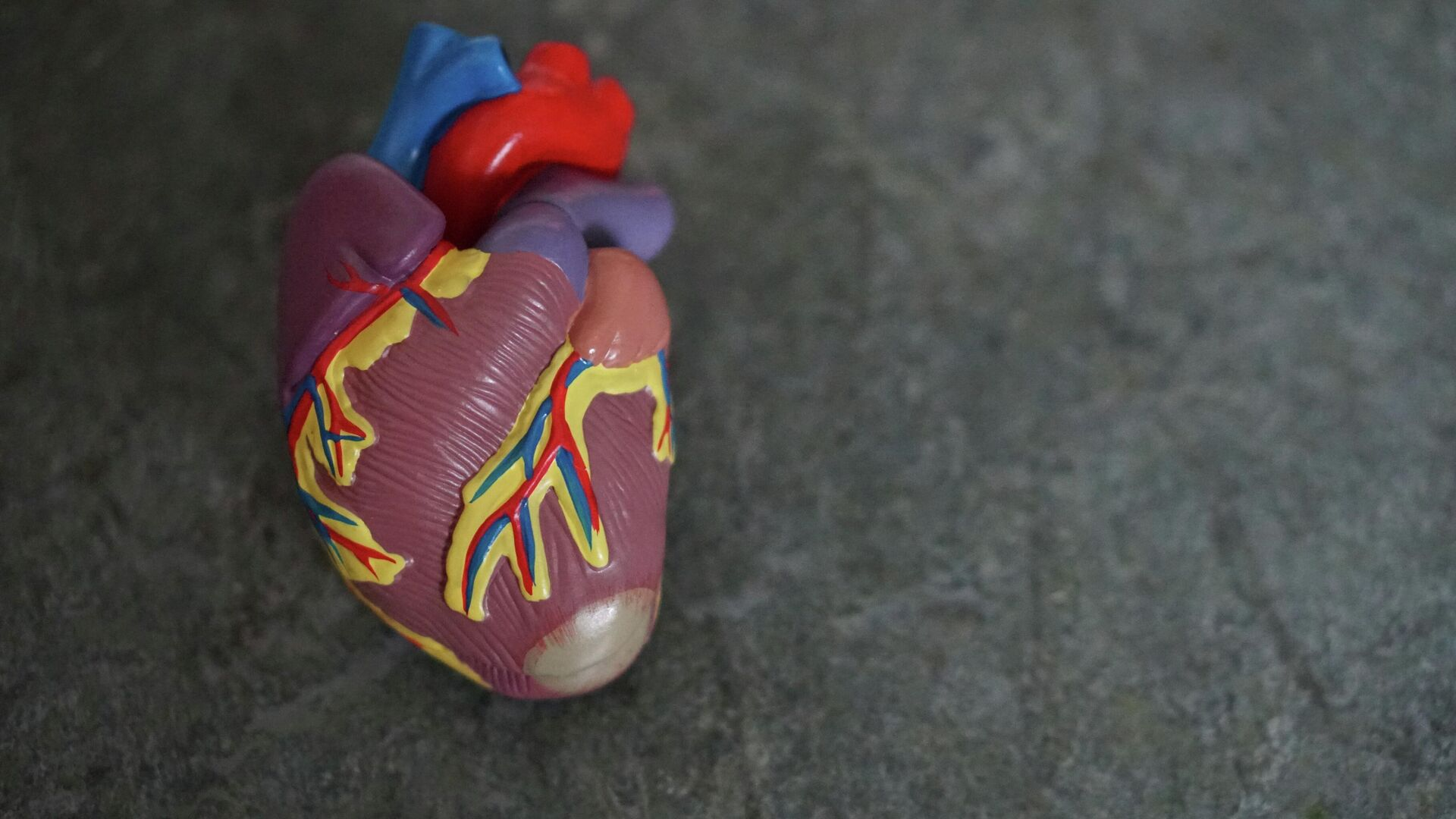 Modelo de un corazón  - Sputnik Mundo, 1920, 15.08.2021