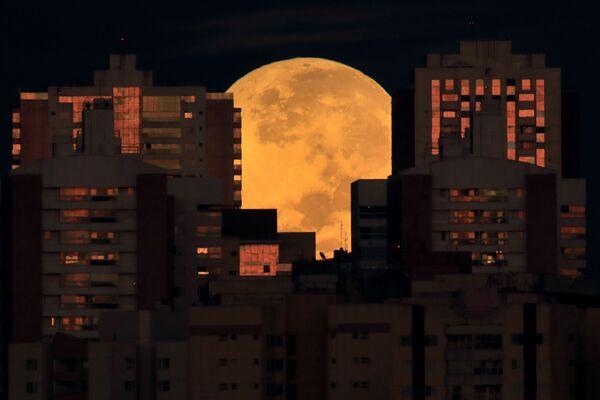 La luna detrás de unos edificios en Brasilia, Brasil, durante el inicio de un eclipse lunar total el 26 de mayo. - Sputnik Mundo