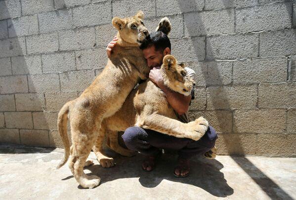 Un palestino juega con cachorros de león en la azotea de una casa en el sur de la Franja de Gaza, el 23 de mayo. - Sputnik Mundo