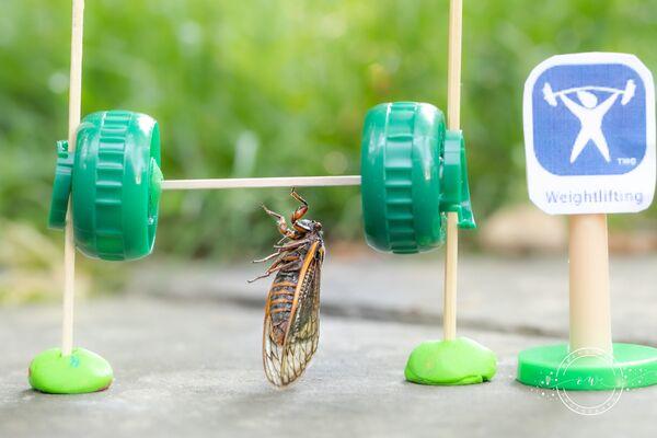 Las cigarras no son peligrosas para los humanos, por lo tanto los científicos llaman a no usar insecticidas contra estos insectos.En la foto: una cigarra levanta una haltera. - Sputnik Mundo