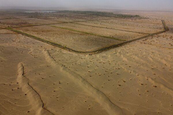 El desierto de Gobi es el tercero más grande del mundo y cubre vastas zonas de Mongolia y el norte de China. En la foto: árboles plantados al borde del desierto de Gobi, en la provincia de Gansu, en el marco del proyecto de la gran muralla verde.  - Sputnik Mundo