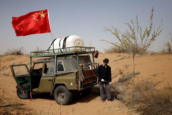 Actualmente, la gran muralla verde es el mayor proyecto de jardinería en la historia de la humanidad.En la foto: un hombre riega los árboles plantados al borde del desierto de Gobi, en la provincia de Gansu.  - Sputnik Mundo