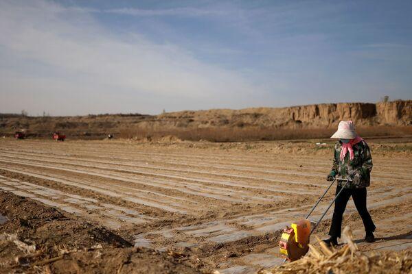 China trata de convertir los desiertos y pantanos estériles cercanos a sus fronteras en tierras de cultivo. En la foto: un trabajador planta maíz en una aldea cercana al borde del desierto de Gobi, en la provincia de Gansu.  - Sputnik Mundo
