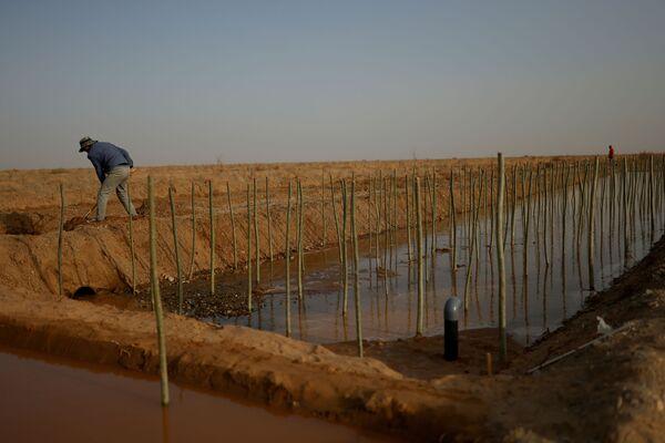 En su mayoría se plantan los álamos y tamariscos, que son poco exigentes. Se prevé que se adaptarán al clima local y crecerán rápidamente. Además, se planea plantar álamos genéticamente modificados.En la foto: un residente local cerca de un canal de riego en una granja forestal estatal en el borde del desierto de Gobi, en la provincia de Gansu.  - Sputnik Mundo