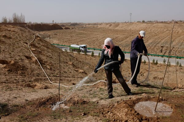 Trabajadores riegan los árboles plantados al borde del desierto de Gobi, en la provincia de Gansu.  - Sputnik Mundo