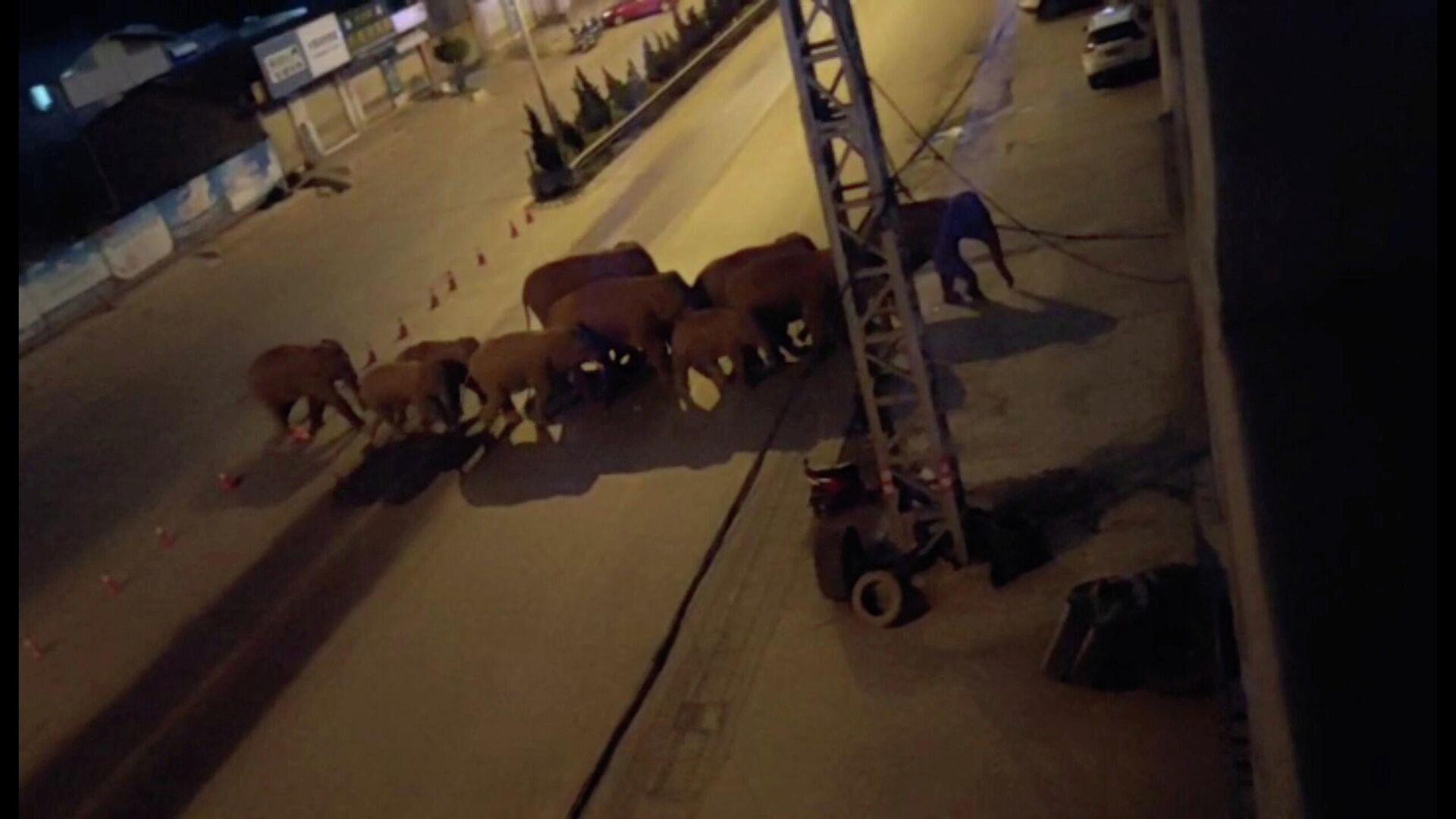 Una manada de elefantes camina por una carretera en Eshan, Yunan, China, el 27 de mayo de 2021 - Sputnik Mundo, 1920, 03.06.2021