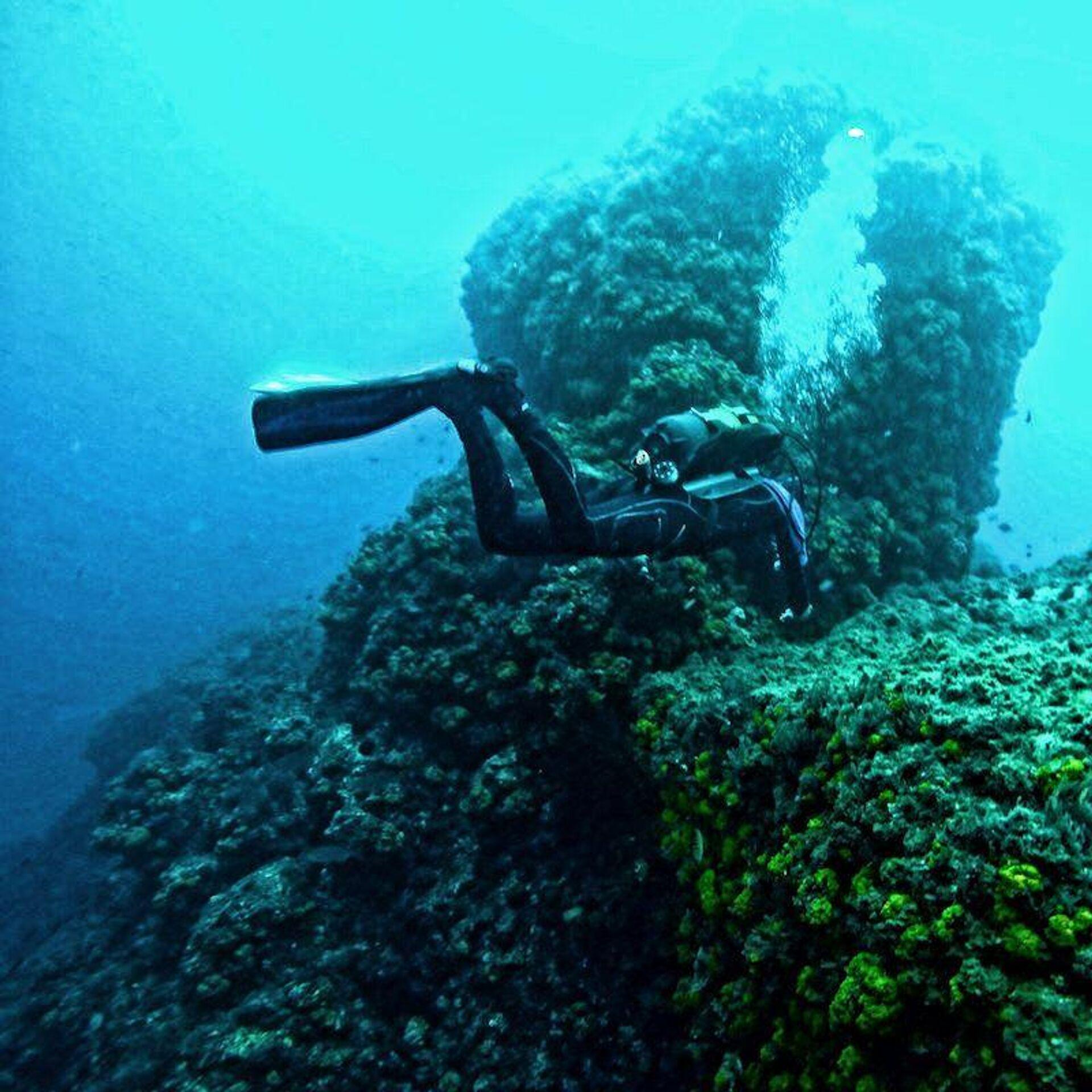 Fran Kucker buceando con algas en las costas de Maro–Cerro Gordo - Sputnik Mundo, 1920, 04.06.2021