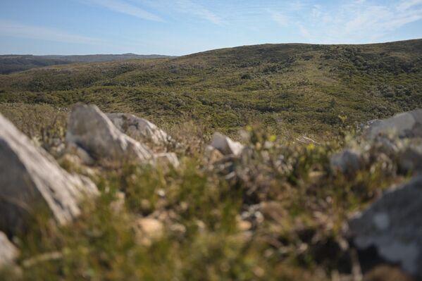 Ambá es un colectivo interdisciplinario que trabaja para conservar y regenerar la biodiversidad de las serranías que forman parte de la alta cuenca de la Laguna de Rocha, en el departamento homónimo y en el de Maldonado, en el este de Uruguay.  - Sputnik Mundo
