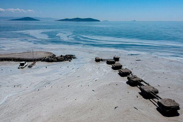 Si se reduce a la mitad el nivel de sal en las aguas residuales, el oxígeno en el agua marina volverá a subir al cabo de cinco o seis años, afirman los especialistas. - Sputnik Mundo
