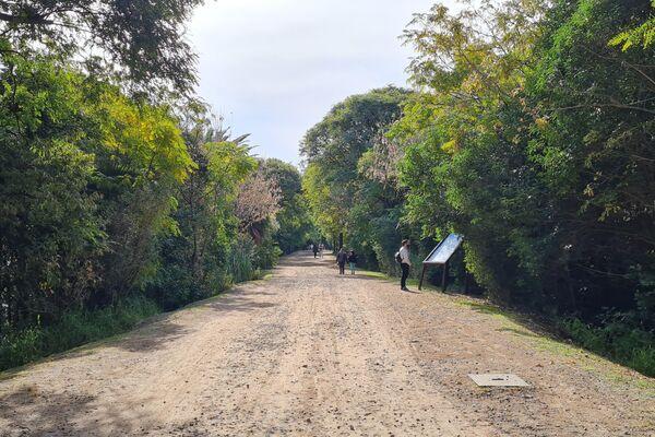 Caminar por los senderos de la Reserva Ecológica Costanera Sur es un viaje a otro mundo - Sputnik Mundo
