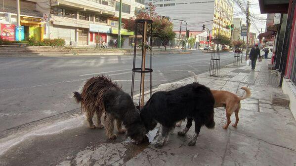 16:24. Por la céntrica avenida Heroínas, algunos perros que juegan en la ciudad abandonada se detienen un momento para refrescarse en un charco. - Sputnik Mundo