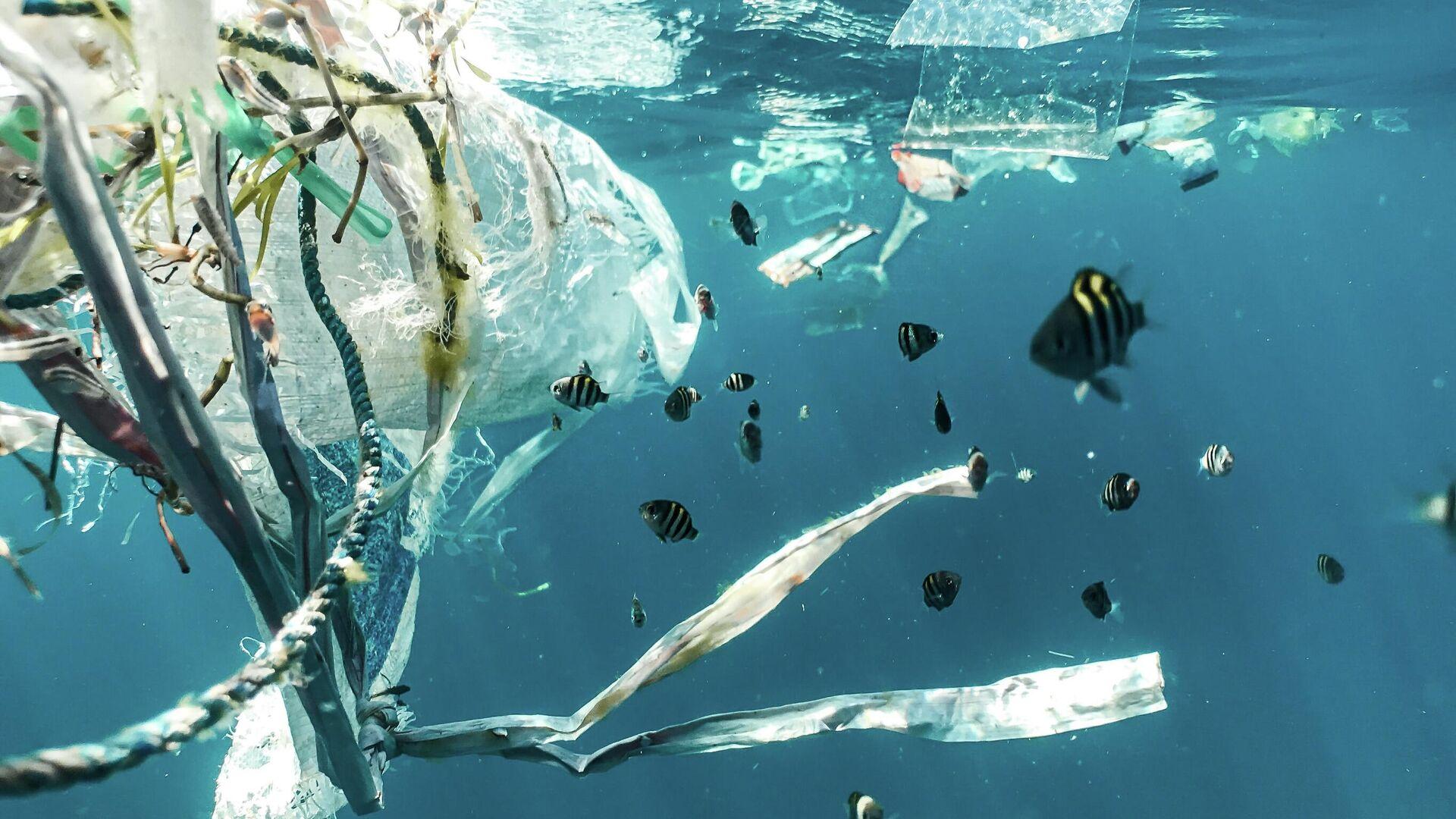 Plastic pollution and juvenile fish. - Sputnik Mundo, 1920, 16.06.2021