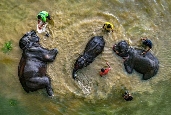 'Es  la hora del baño', Abdul Momin, Bangladés. - Sputnik Mundo