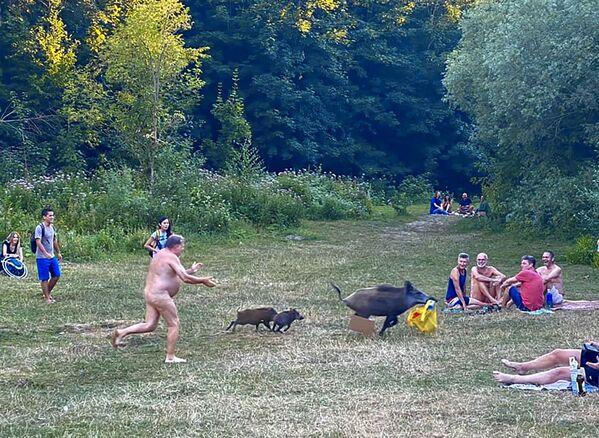 En la orilla del lago berlinés de Teufelssee, una jabalí le robó un ordenador portátil a un nudista. - Sputnik Mundo