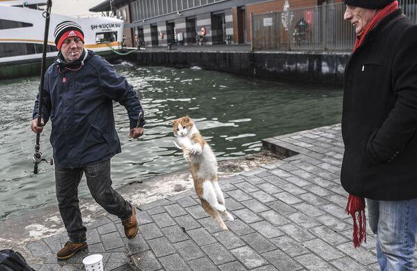 Un gato intenta robarle un pez a un pescador en Estambul, Turquía. - Sputnik Mundo
