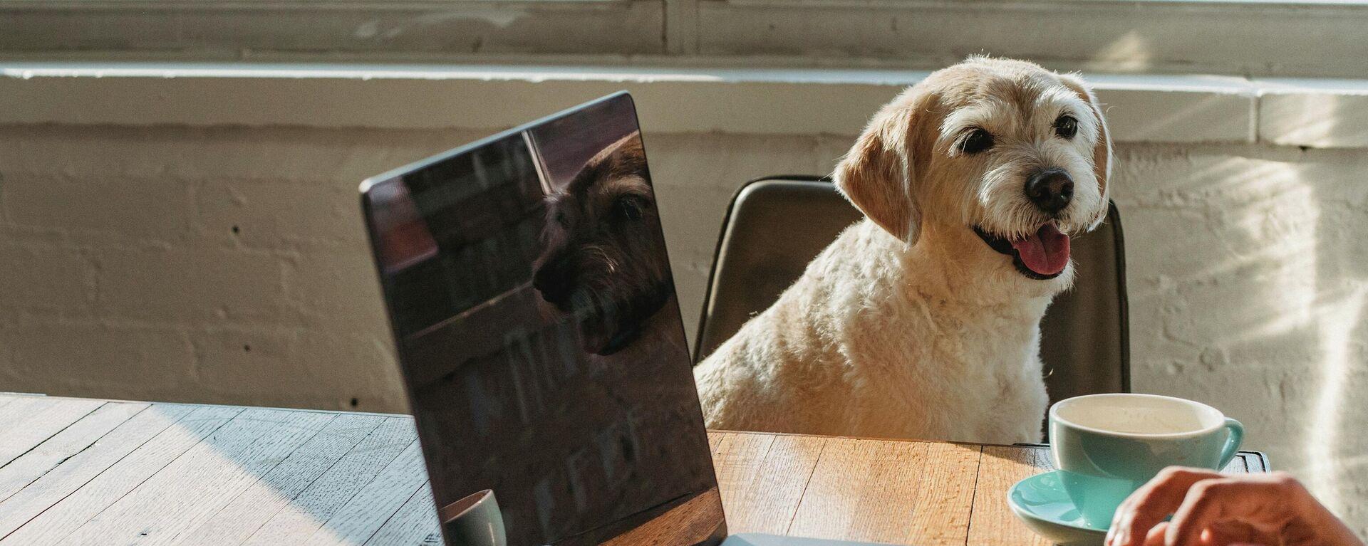 Un perro en la oficina, ilustración - Sputnik Mundo, 1920, 30.06.2021
