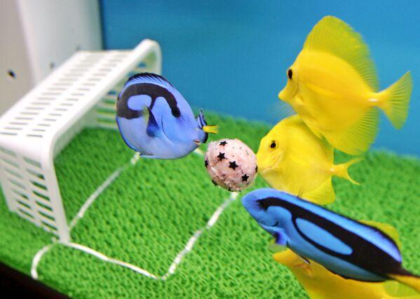 Un diminuto campo de fútbol instalado en el acuario Hakkeijima Sea Paradise en la ciudad de Yokohama (Japón). - Sputnik Mundo