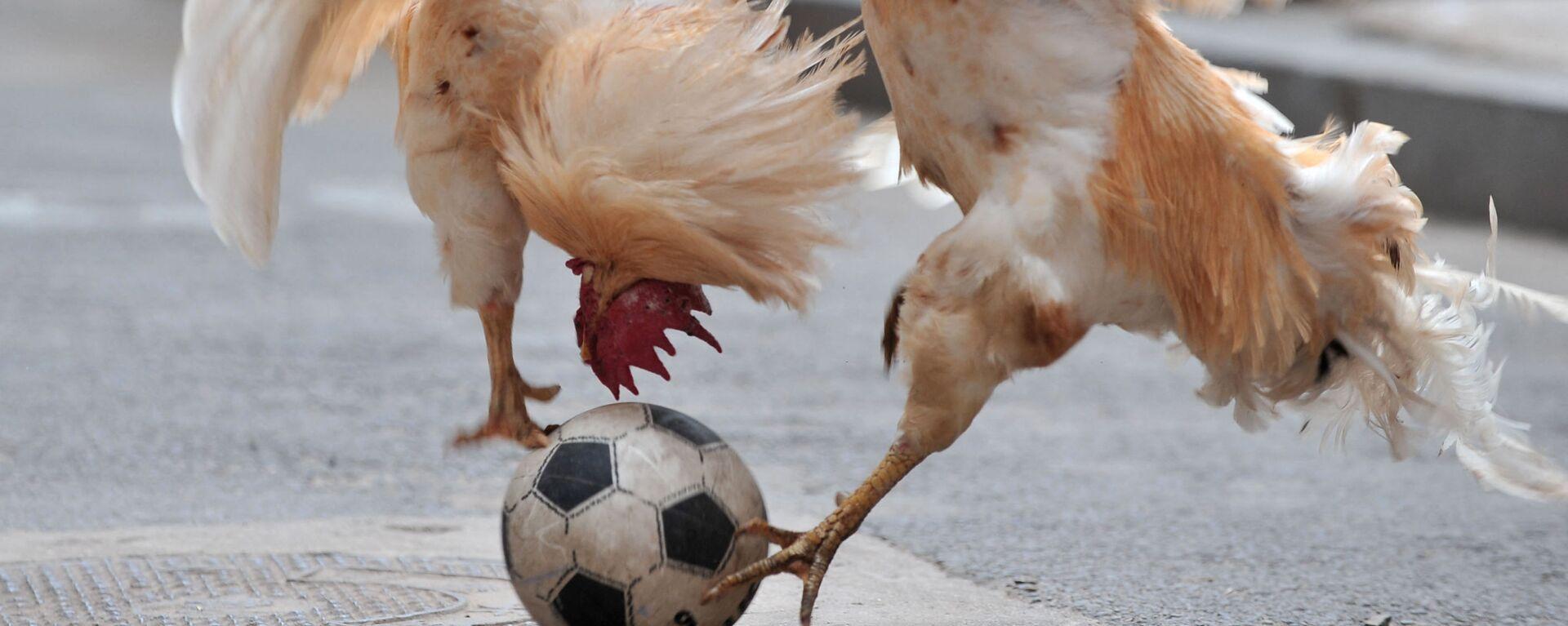 Два петуха дерутся за мяч во время шоу футбольного матча с цыплятами в Шэньяне, Китай - Sputnik Mundo, 1920, 02.07.2021