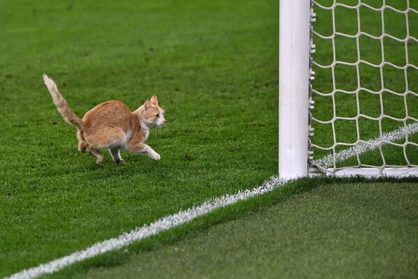 Un gato interrumpe un partido entre el Milán y la Juventus en Turín. - Sputnik Mundo
