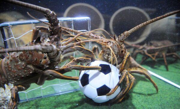 Dos langostinos en una cancha de fútbol improvisada, en el acuario Sea Life (Alemania). - Sputnik Mundo