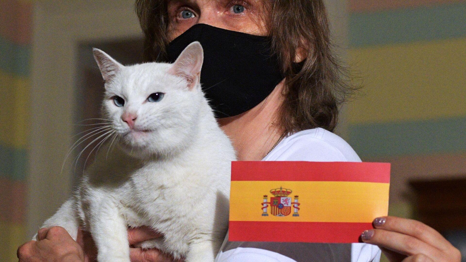 El gato ruso Aquiles pronostica la victoria de España sobre Suiza en la Eurocopa - Sputnik Mundo, 1920, 02.07.2021