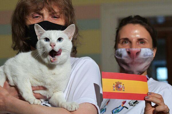 El gato ruso Aquiles pronostica la victoria de España sobre Suiza en la Eurocopa - Sputnik Mundo