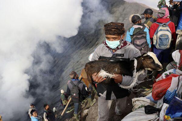 Un creyente porta una cabra a la boca del volcán activo Bromo, en la isla de Java, como sacrificio durante el ritual religioso Yadnya Kasada. - Sputnik Mundo