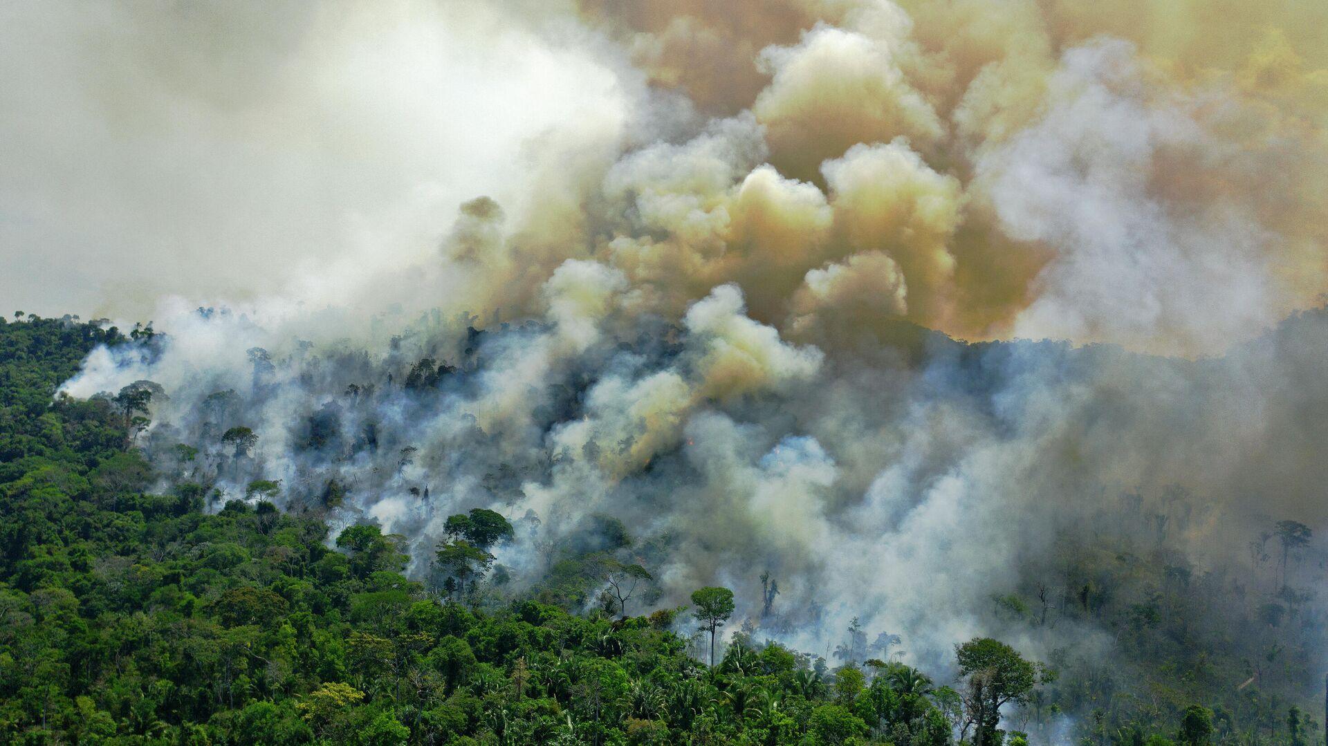 Incendio en la Amazonía brasileña - Sputnik Mundo, 1920, 02.07.2021
