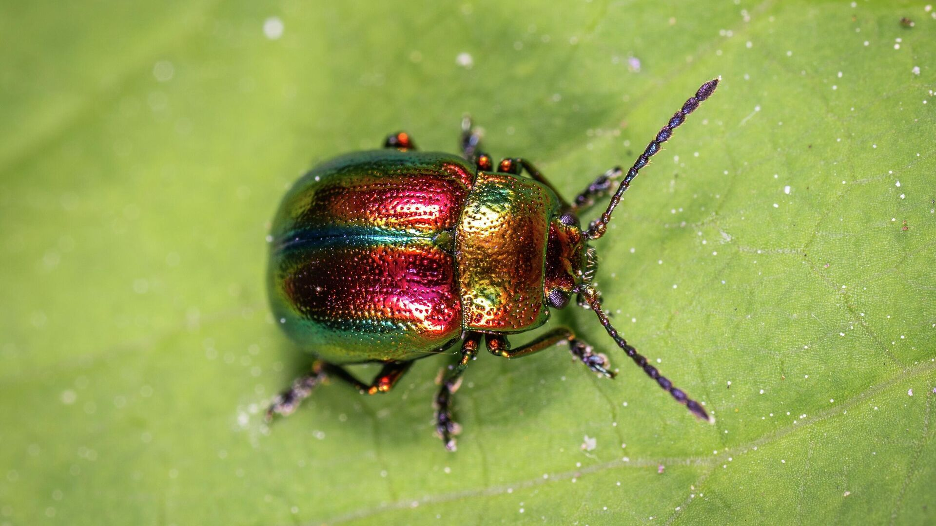 Un escarabajo, imagen referencial - Sputnik Mundo, 1920, 03.07.2021