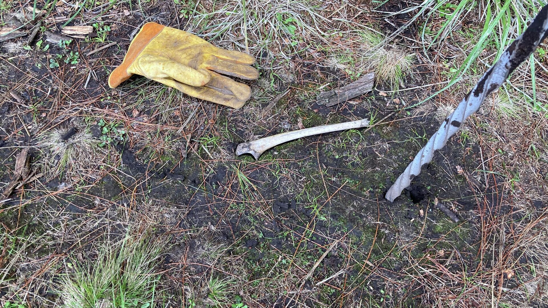 Resto óseo hallado en el Ajusco - Sputnik Mundo, 1920, 05.07.2021