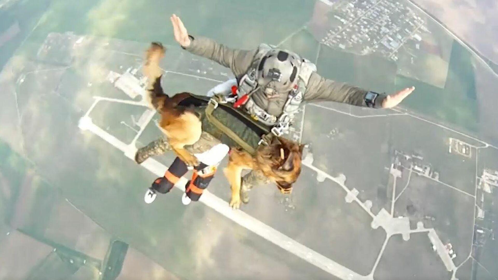 Prueban un sistema de paracaidismo canino en Rusia - Sputnik Mundo, 1920, 08.07.2021