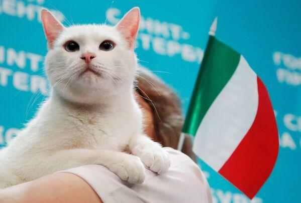 El gato Aquiles, un habitante del Museo del Hermitage de San Petersburgo, fue el oráculo del Mundial de Rusia en 2018, cuando adivinó con éxito los resultados de la mayoría de los partidos.    - Sputnik Mundo