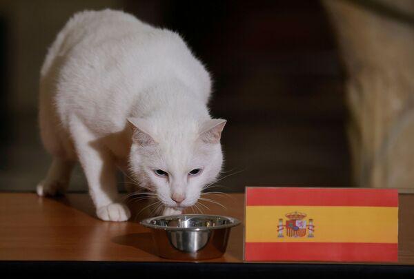 Otra predicción de Aquiles que se hizo realidad fue la victoria de la selección de España contra Suiza en un partido de cuartos de final.   - Sputnik Mundo