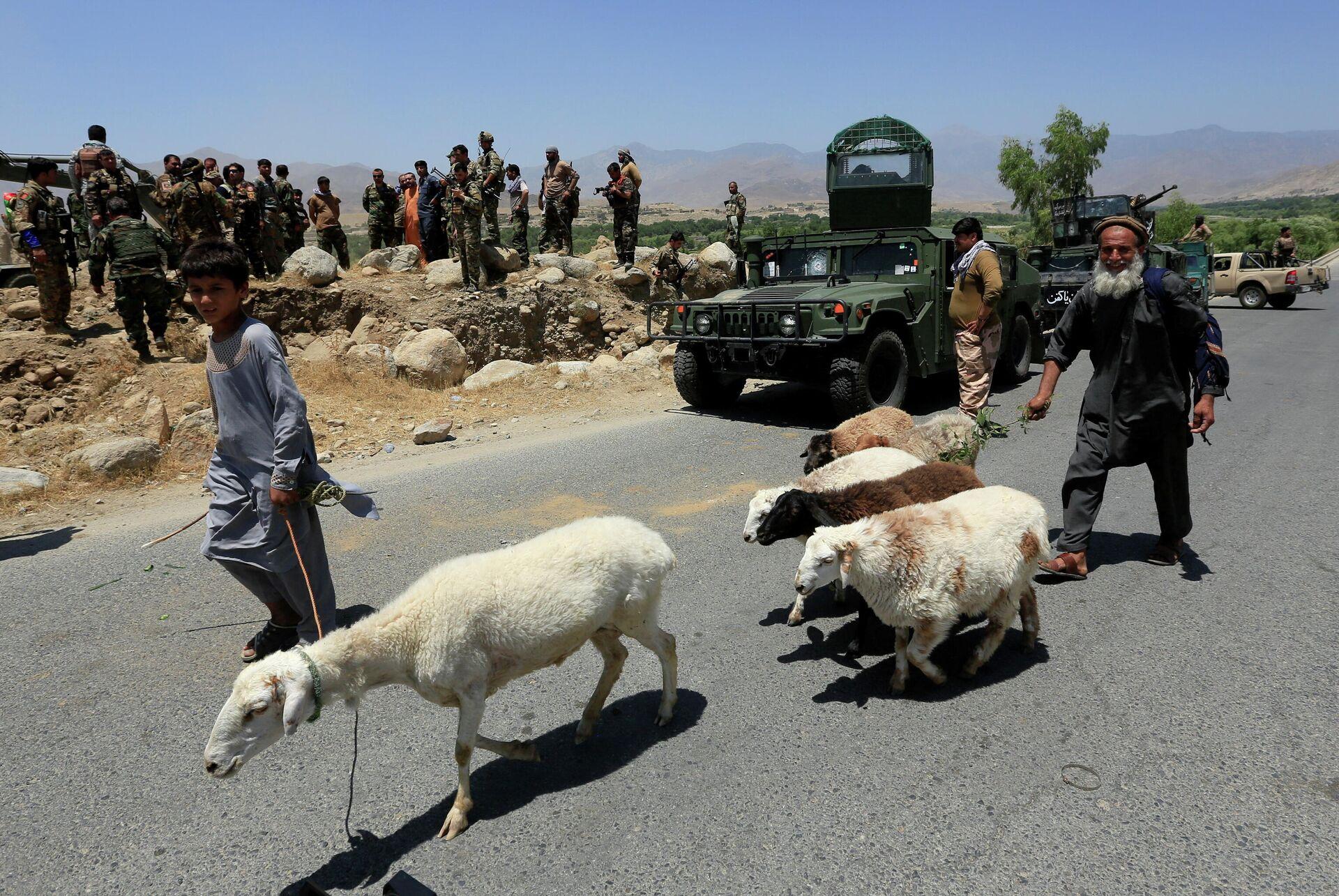 Soldados del Ejército Nacional Afgano en un puesto de control recuperado de los talibanes, mientras un hombre pasa con sus ovejas en el distrito de Alishing de la provincia de Laghman, Afganistán, el 8 de julio de 2021. - Sputnik Mundo, 1920, 09.07.2021