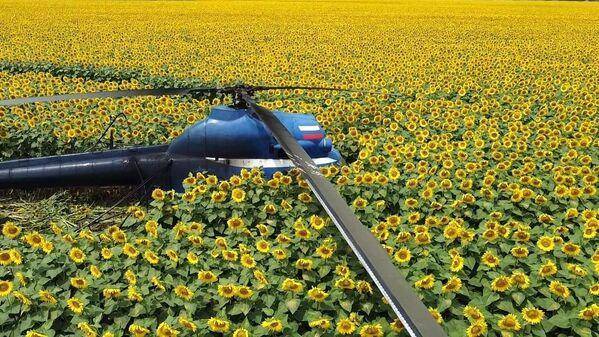 El aterrizaje forzoso de un helicóptero Mi-2 en Kabardino-Balkaria.   - Sputnik Mundo