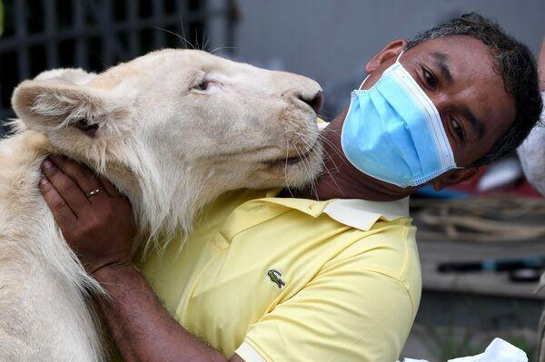 Un empleado del zoo en Phnom Penh, Camboya, con un león llamado Hima.   - Sputnik Mundo