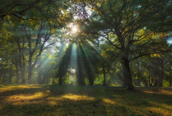 La foto Los rayos del sol en un parque por la mañana, de Alexandr Asedach, tomada a las afueras de Gelendzhik, a la orilla del mar Negro. - Sputnik Mundo