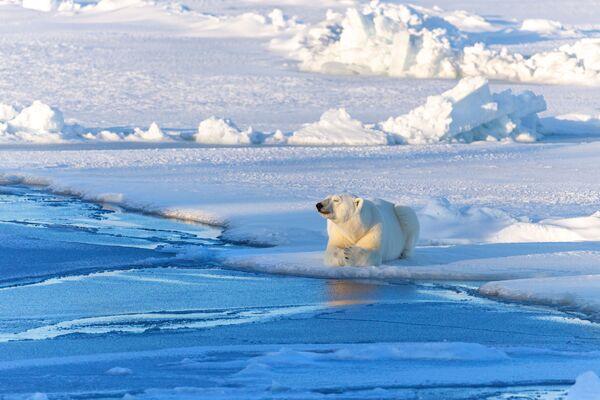 La meditación ártica: así se titula esta foto de Andréi Parshin que se tomó en la región de Arjánguelsk, al norte del país. - Sputnik Mundo