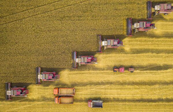 La foto de Ígor Kliajin, titulada La batalla por la cosecha, capturada en la región de Lipetsk. - Sputnik Mundo