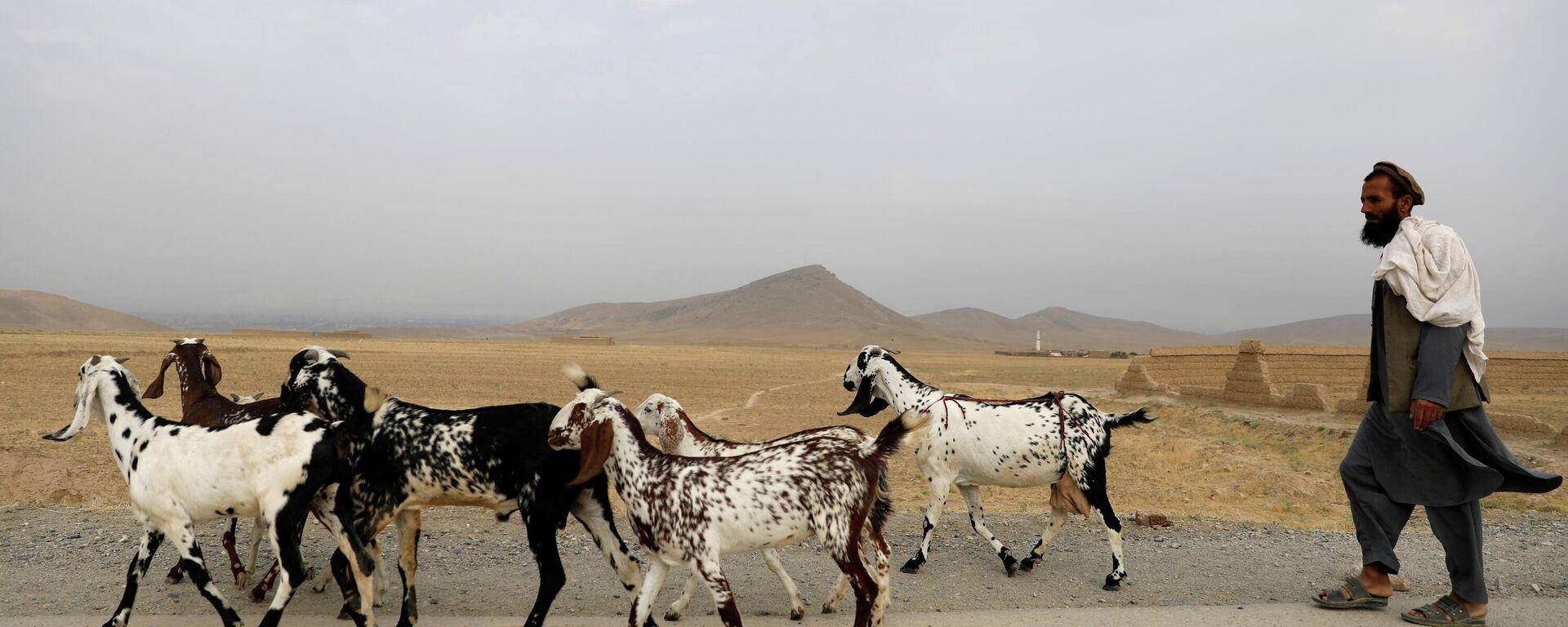 Un hombre afgano con unas cabras - Sputnik Mundo, 1920, 13.07.2021