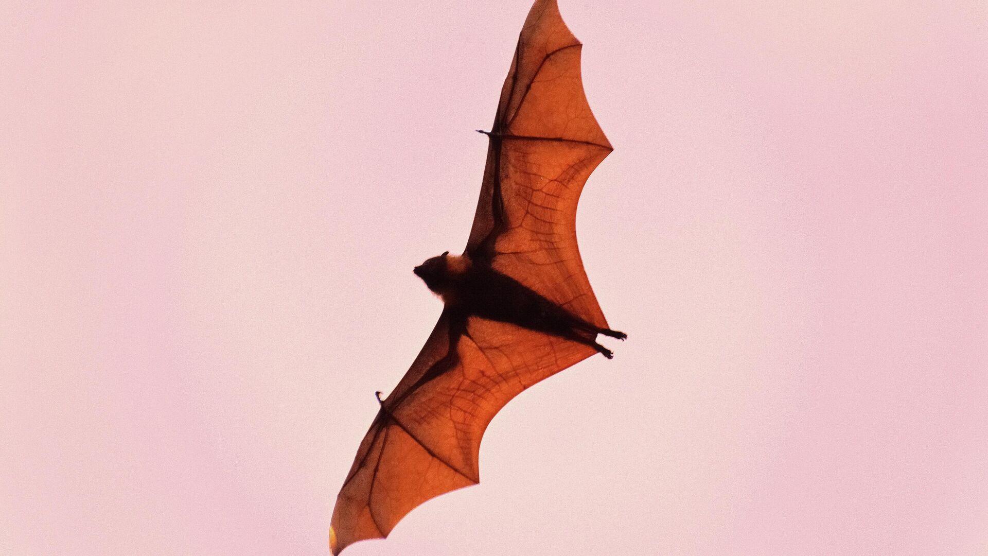 Bat flying  - Sputnik Mundo, 1920, 19.07.2021