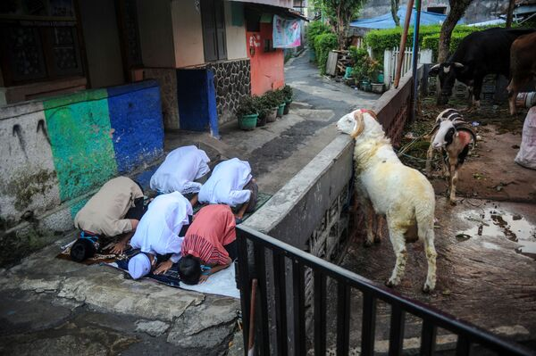 El Día del Sacrificio se sacrifica un animal y su carne se distribuye a los necesitados, a los familiares, vecinos y amigos que visitan o a los invitados que reciben. En este hay que realizar todas las buenas acciones posibles.En la foto: Celebración del Eid al Adha en Bandung, Indonesia. - Sputnik Mundo
