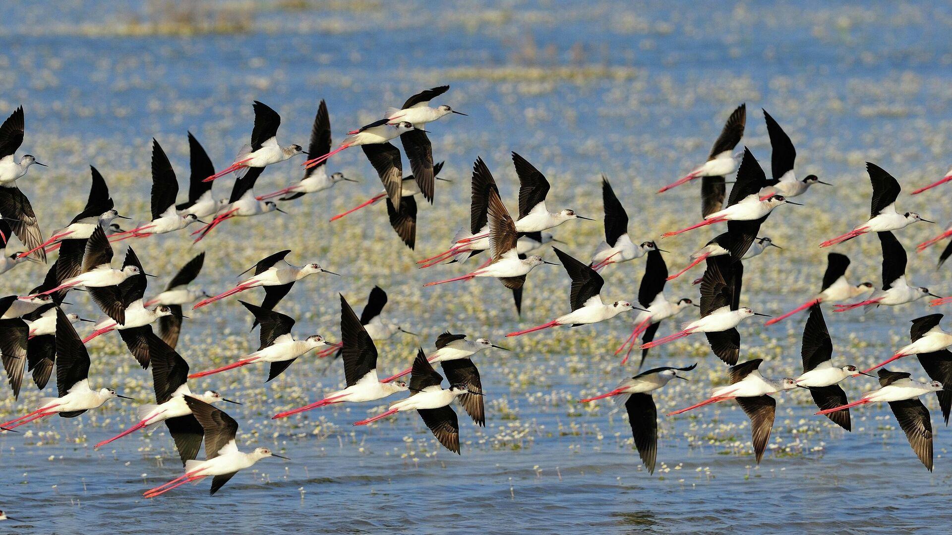 Aves en el Parque Nacional de Doñana - Sputnik Mundo, 1920, 22.07.2021