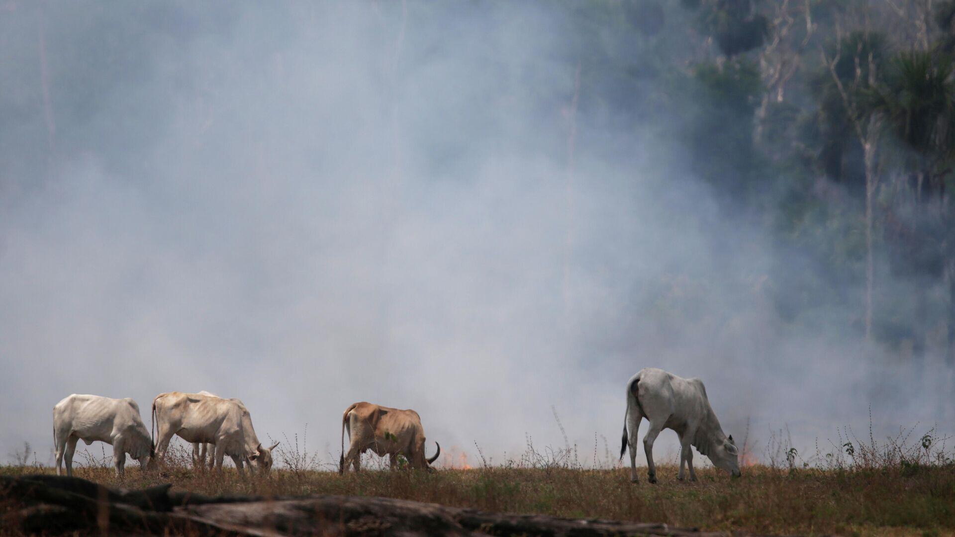 Incendio forestal en la Amazonía - Sputnik Mundo, 1920, 23.07.2021