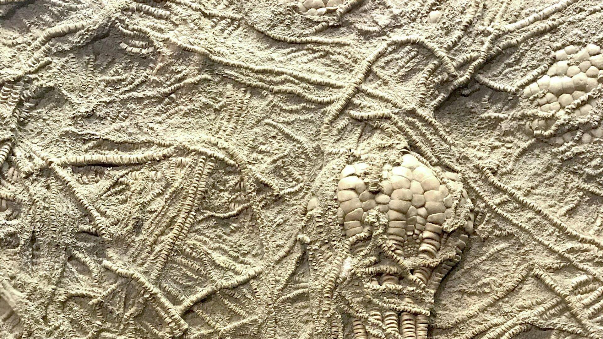 Fósiles, imagen ilustrativa - Sputnik Mundo, 1920, 25.07.2021