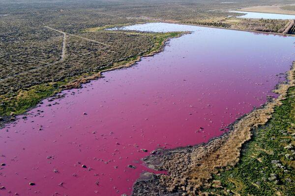 El color se debe a un conservante químico que se usa en los langostinos que se exportan. - Sputnik Mundo